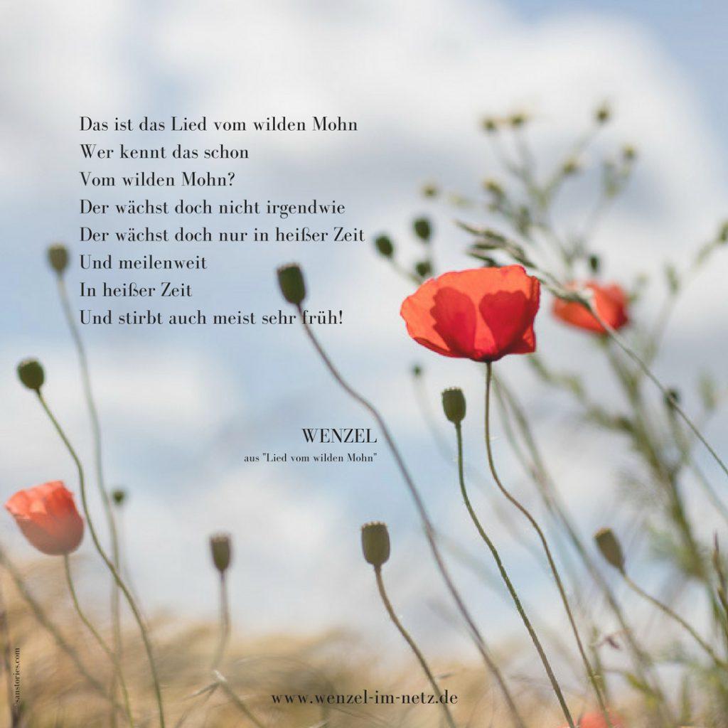 """Der Text von Wenzel """"Lied vom wilden Mohn"""""""