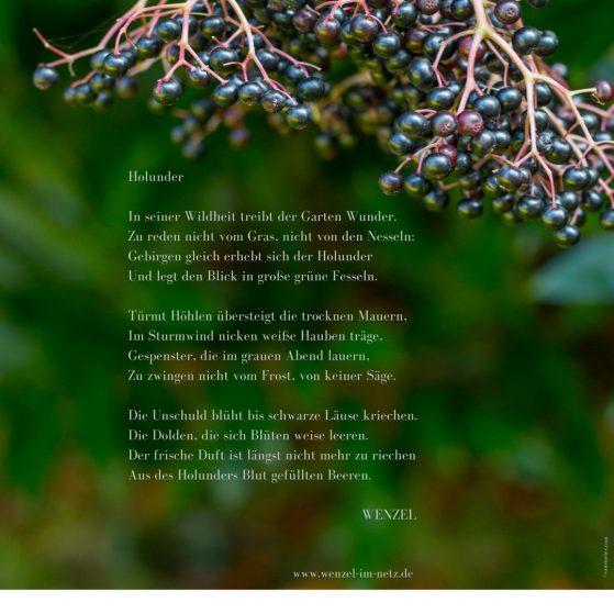 Gedicht Holunder von Wenzel